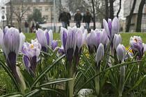 Jaro v krajském městě.