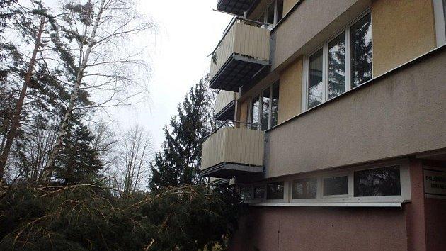 Stromy padaly ve Velešíně ve městě imimo něj.