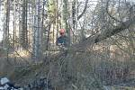 Stromy padaly ve Velešíně ve městě i mimo něj.