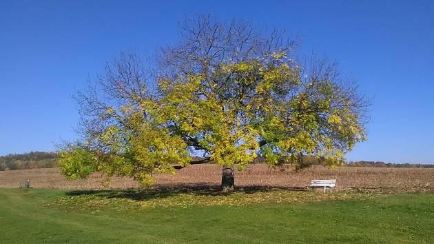 Strom, ilustrační snímek.