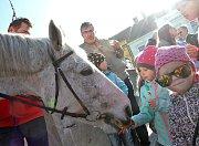Počasí spíše připomínalo jaro, do Kaplice přesto přijel Martin na bílém koni