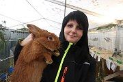 Výstava králíků v Kaplici.