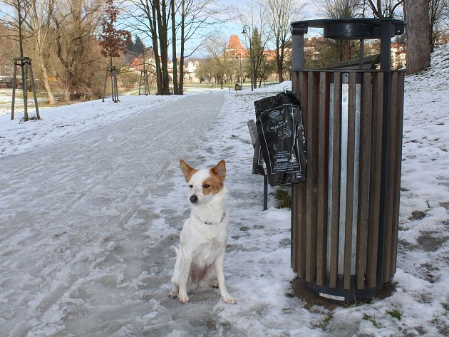 Český Krumlov ročně po městě rozvěsí 300 tisíc sáčků na psí exkrementy.