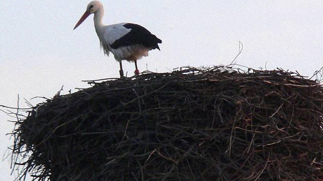 Hnízdo už si hlídá čáp v Horním Třeboníně.