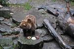 I Medvědí Vánoce na krumlovském zámku v roce 2020 provázela přísná protiepidemická opatření, musely se obejít bez stovek diváků.