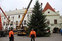 Vánoční jedle na českokrumlovském náměstí Svornosti.