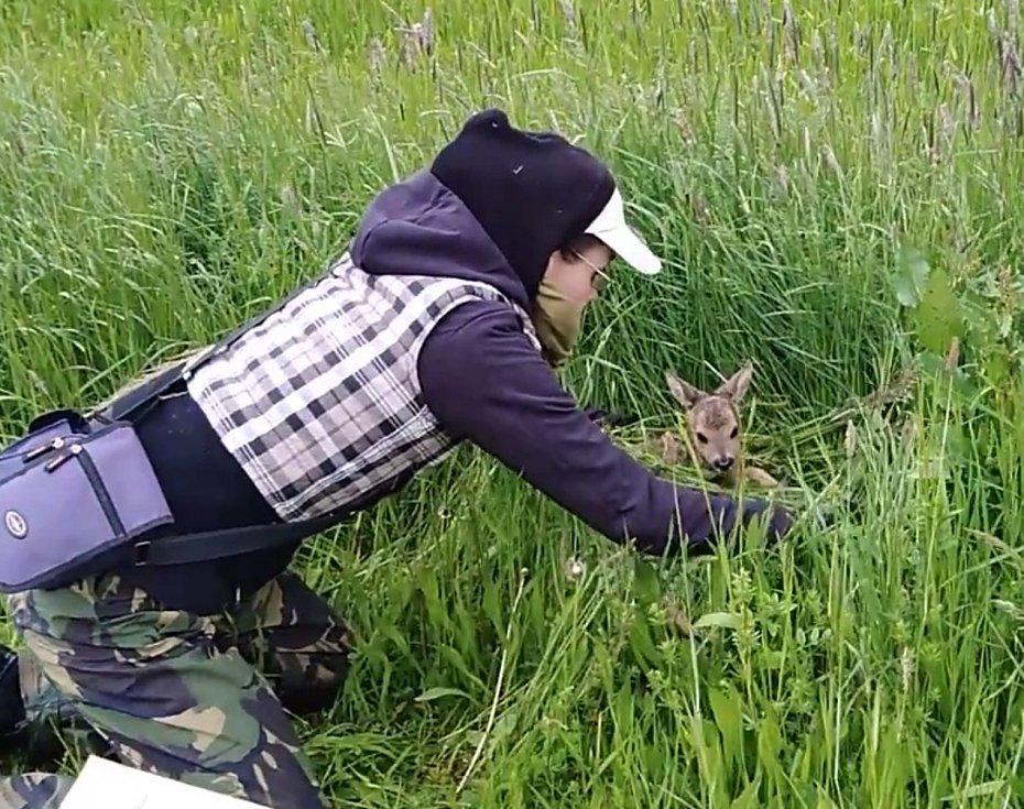 Šanci na život dostala ve čtvrtek ráno dvě srnčata na louce u Velešína, která našel dron s termovizí. Nebýt dobrovolníků a také ochoty zemědělců a myslivců spolupracovat, rozsekala by je žací lišta.