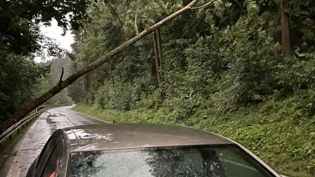 Strom spadlý na silnici za Větřním na Krumlovsku.