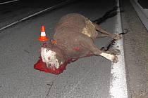 Čelní náraz toyoty na mezinárodní silnici E 55 u Kaplice kráva nepřežila.