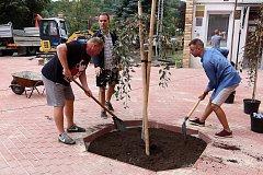 Učitelé gymnázia Martin Jakab (vlevo) a Jan Palkovič sází smuteční jabloň.