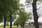 Stromořadí kolem silnice E 55 před Netřebicemi.