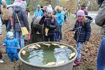 Výlov Dolanského rybníka v Boleticích.