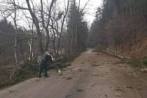 Před Rožmberkem se směrem od Vyššího Brodu těží podél silnice dřevo.
