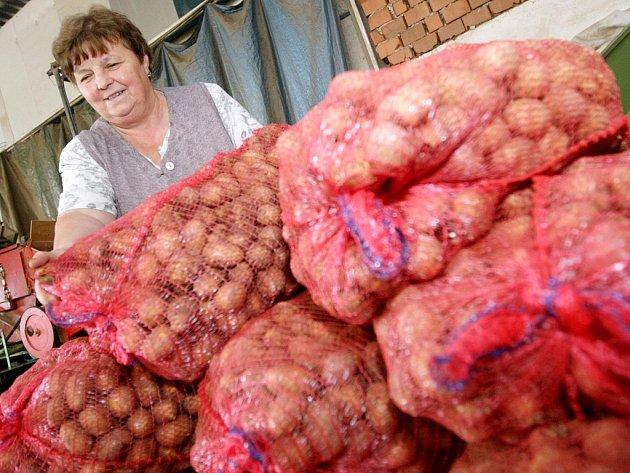 Karlovo náměstí ovládnou oslavy brambor