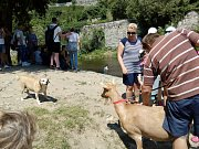 Jan Duda se vydal do města odvážně s kozou.