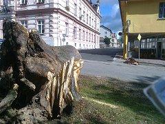 Lípa v důsledku poryvu větru spadla na íčko v Horní Plané.
