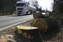 Nyní jsou pokáceny čtyři stromy, které jsou v katastru Střítěže.