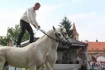 Drezúrní vystoupení s koňmi v Pivovarské zahradě v rámci slavností růže.