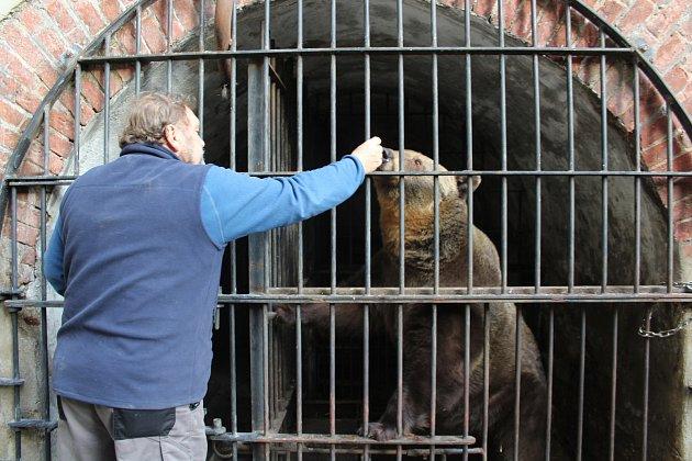 Můžete se koupit poukaz na návštěvu medvědího příkopu a podpořit tak jejich chov vKrumlově.