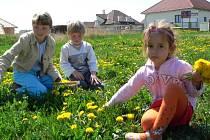 Stále více městských lidí přitahuje například Dolní Třebonín, kde před několika lety vyrostlo na poli  mnoho rodinných domů.