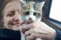 """""""Kastrované kočky jsou zdravější, silnější a dožívají se vyššího věku. Myši samozřejmě chytají dál,"""" říká Miroslava Pešková z SOS Animal."""