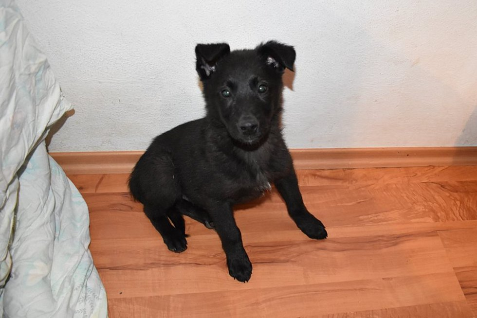 Pes pro život, tak se jmenuje domácí útulek pro opuštěné zvířata Dagmar Šímové, ve kterém na hodnou rodinu čeká spousta krásných pejsků.