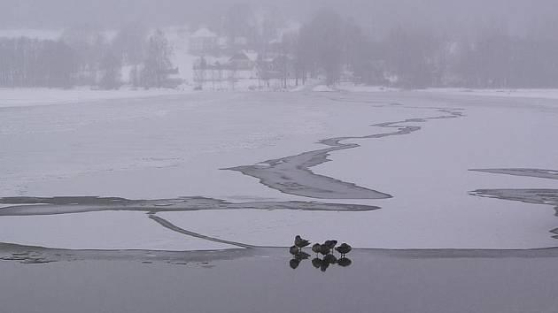 Zamrzající Lipno v Horní Plané. Dnes už je zamrzlé celé.