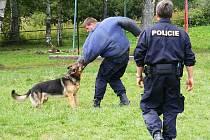 Služební sedmiletý pes Horny při výcviku.