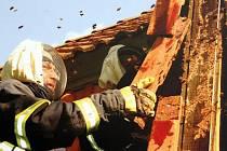 Hasič likviduje hnízdo hmyzu. Ilustrační foto.