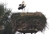 Od víkendu si hlídá hnízdo v Dolní Třeboníně čáp bílý.