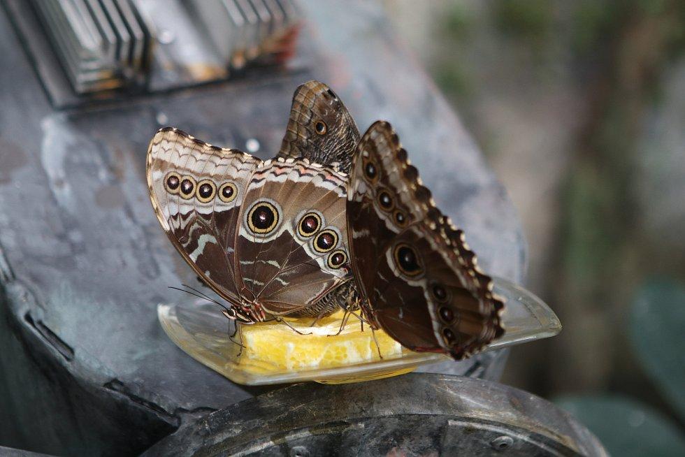 Nový motýlí pavilon Papilonia Lipno byl otevřen pro veřejnost v Lipně nad Vltavou