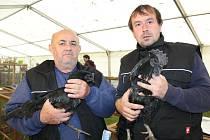 Jaroslav Klícha ze Stříteže chová desítky slepic, holubů a husy.