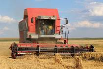 Sklizeň pšenice na polích Zemědělského družstva v Mojném.