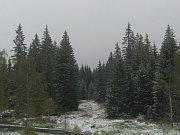 Poprašek ráno ležel i na Bučině, Horské Kvildě a Churáňově (na snímku).