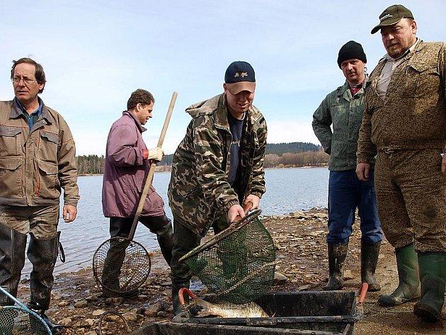 Stovky mrtvých ryb vytáhli příslušníci Petrova cechu v minulých dnech z tzv. Malého Lipna.