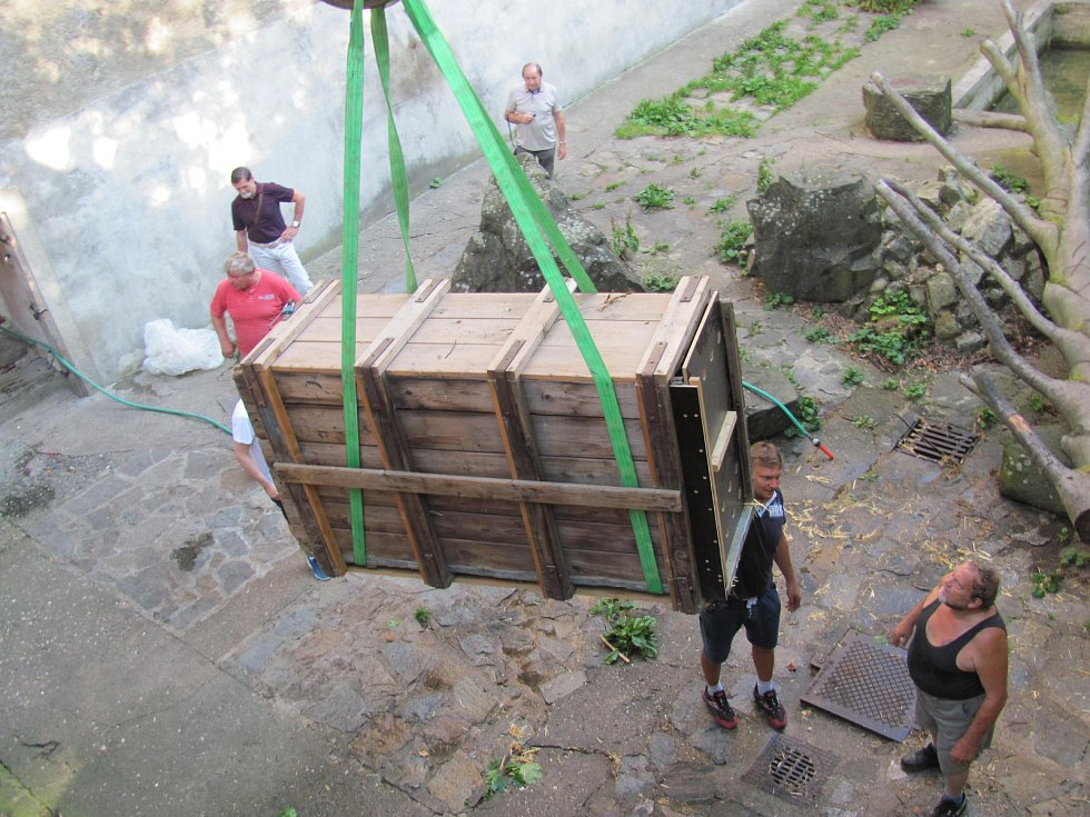 Dvouletá medvíďata se po příjezdu z olomoucké zoo zabydlují na krumlovském zámku.