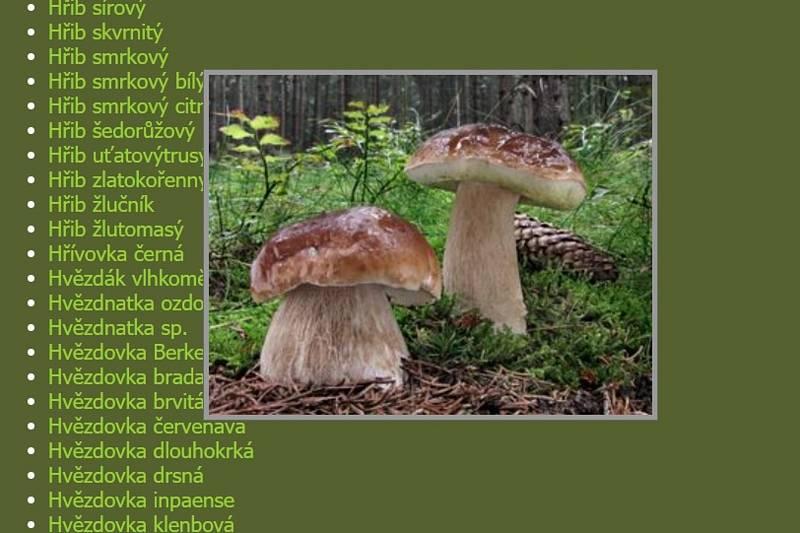 V online atlasu na houbareni.cz najdete téměř 2 000 hub, včetně fotografií, informací o výskytu nebo možné záměně za jiné druhy.