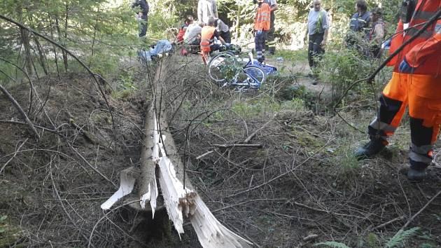 Strom zabil na lesní cestě u Světlíka cyklistu.
