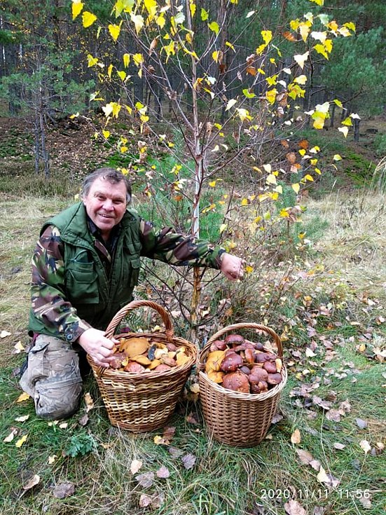 Podzimní uzavírka lesa ve Veselí u České Lípy.