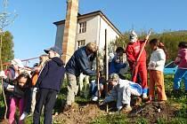 Každá třída si za pomoci kantorů zasadila svůj ovocný strom, o který bude muset pečovat.
