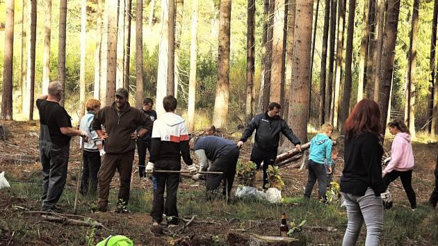 Sázení stromků v lese v Rožmberku nad Vltavou.