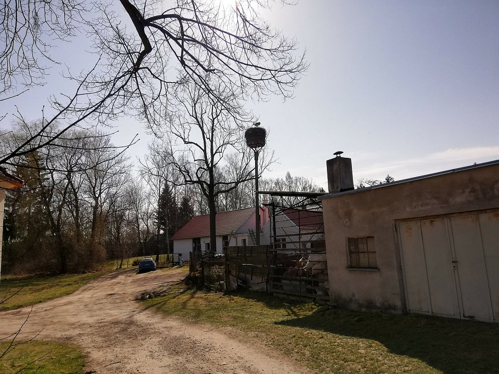 Čápi na hnízdech v Horním Třeboníně a Křemži a nové bydlení pro čápy v Chlumu.