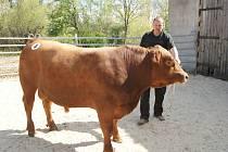 Můžete zavítat také na aukci plemenných býků do Brloha.