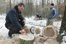Ilustrační foto. Kontrola povolenek k samotěžbě dřeva.