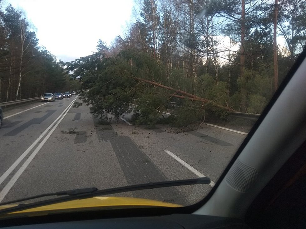 Strom přes cestu spadl mezi Boršovem nad Vltavou a Kamenným Újezdem.