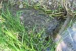 Z některých starých domů prosakují splašky do potoka.