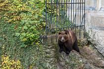 Děti s rodiči navštívili medvědáře a zámecké medvědy.