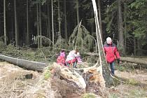 Vichr lámal v Blanském lese stromy.
