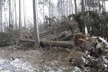Polomy po Sabine v městských lesích Českého Krumlova.