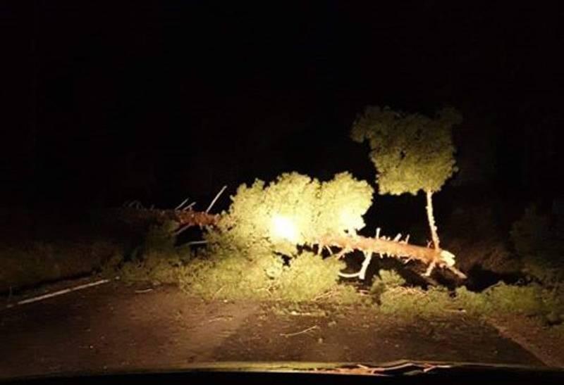 Strom na silnici spadl mezi Mříčí a Holubovem na Českokrumlovsku.